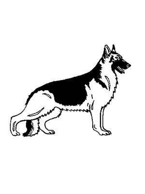 Lost Dog - Lost German Shepherd Dog in #Huffman #TX FidoFinder ID# 406467 Shena Female Tan (tan/beige) German Shepherd Dog Huffman TX (77336) Lost on 02/28/2014