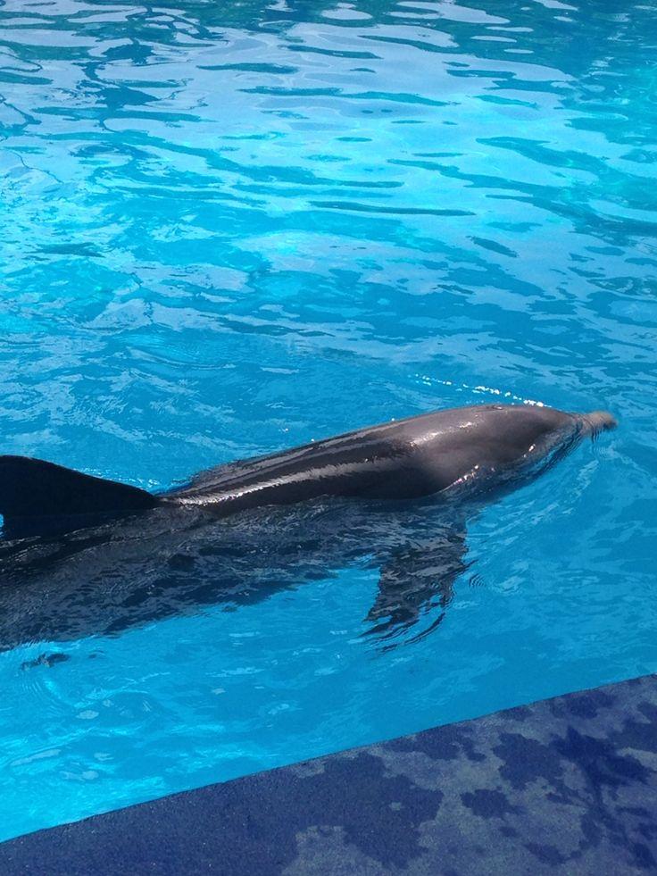 Delfín hermoso.
