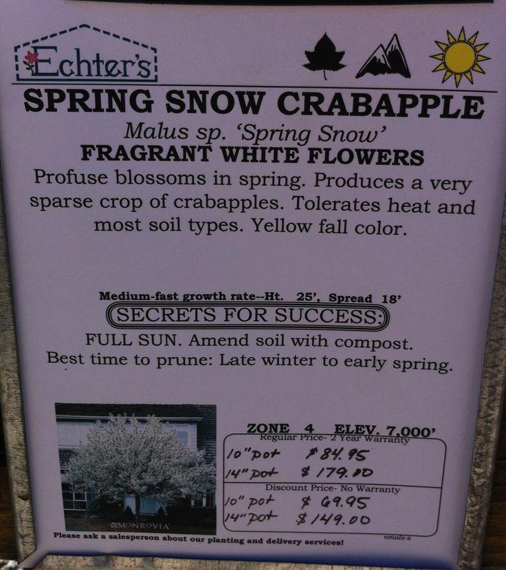 Spring snow crabapple info
