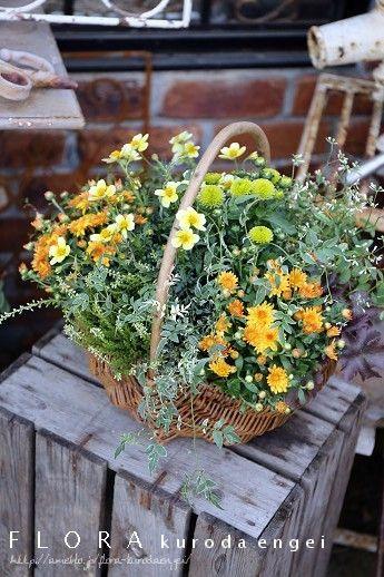 フローラのガーデニング・園芸作業日記-ウィンターコスモス マム 寄せ植え