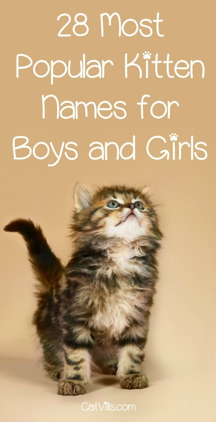These Are The Top 42 Most Popular Kitten Names Girl Cat Names Cute Cat Names Kitten Names