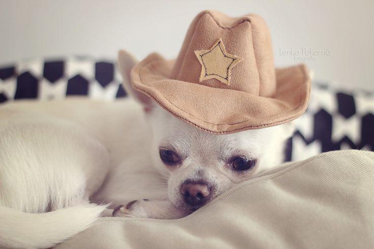 Cowboy dog :-)