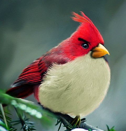 Real Angry Birds.: Angrybird, Real Life, The Real, Life Angry, Real Angry, Beautiful Birds, Angry Birds, Animal, Feathers Friends