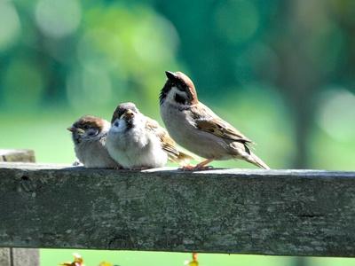Flyvende middagsgæster - Gør-det-selv i haven - Haven - Isabellas