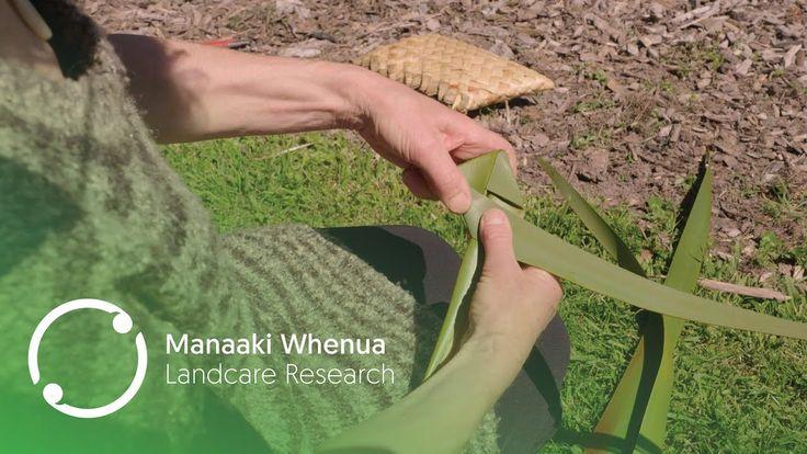Putiputi Flax Weaving Tutorial