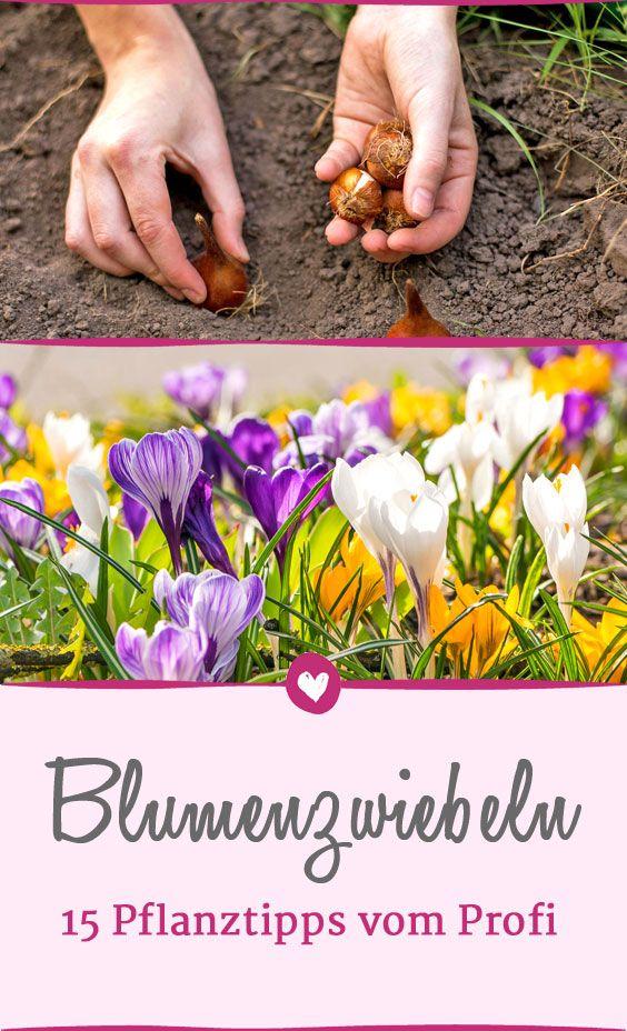 Blumenzwiebeln pflanzen: 15 Profi-Tipps für Krokusse, Tulpen & Co.