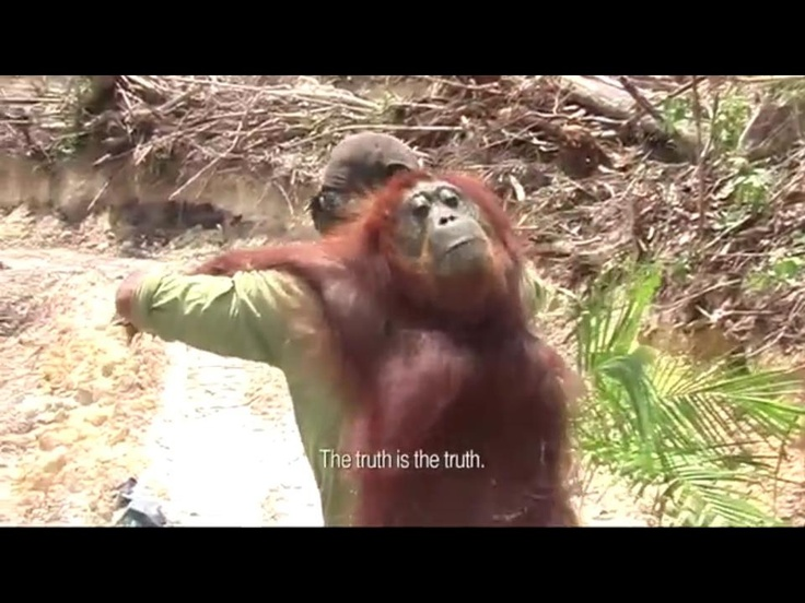 22 best images about quotes palm oil on pinterest new