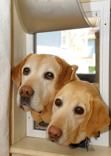 JGM Pet Doors offers a number of exciting options including sliding glass dog doors, doors with dog doors and more.