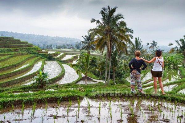 Jatiluwih rice terraces. Bali. Indonesia, Asia.