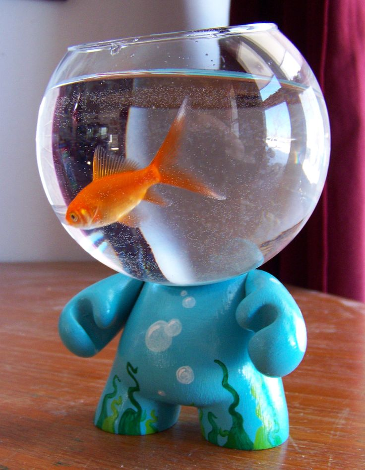 17 best images about my betta on pinterest disney mickey for Betta fish toys