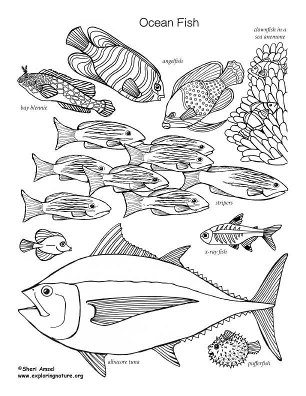 Fish Coloring Pages Pdf Ocean Fish Coloring Page Fish Coloring Page Ocean Coloring Pages Coloring Pages