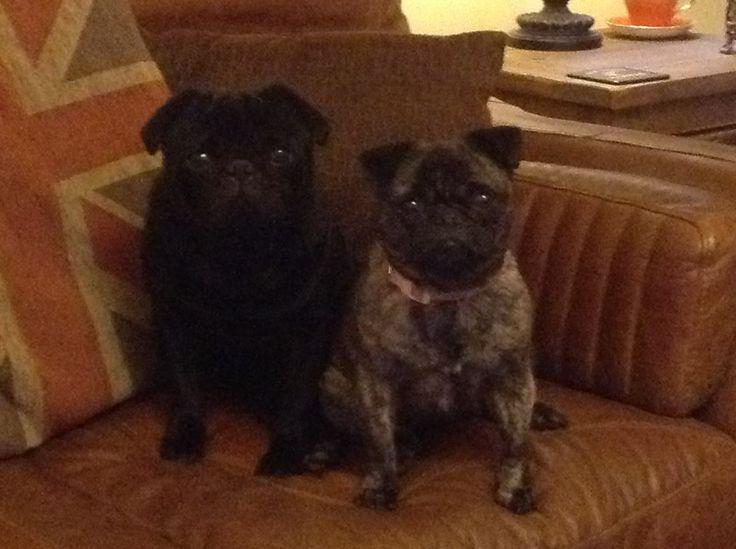Reggie and peppa pug