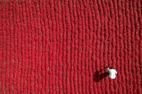 雅虎科技新聞: 2016最佳無人機攝影作品 - Yahoo奇摩新聞 - 印度貢土爾,辣椒農