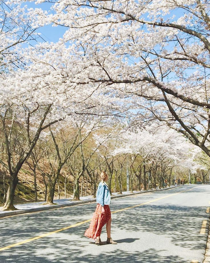 Spring in South Korea is just the greatest <3 www.lifeofbrit.com