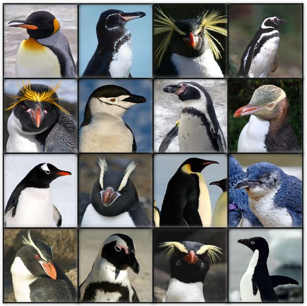 penguin types - Google Search