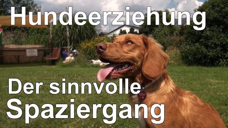 Hundeerziehung ohne Stress - Der sinnvolle Spaziergang verknüpft mit Hun...