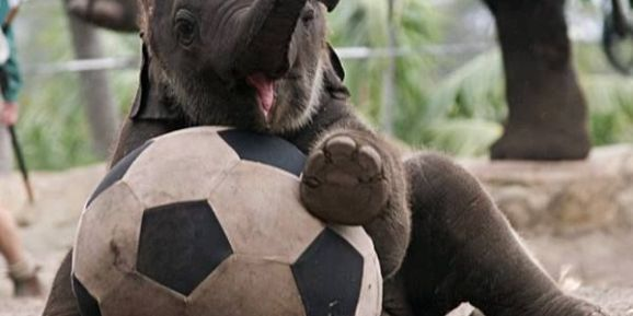 16 Cute Animal Pictures for Your Day | We love cute photos of cats, dogs, horses, pigs, cows, lions, and tigers, and bears… OH MY!