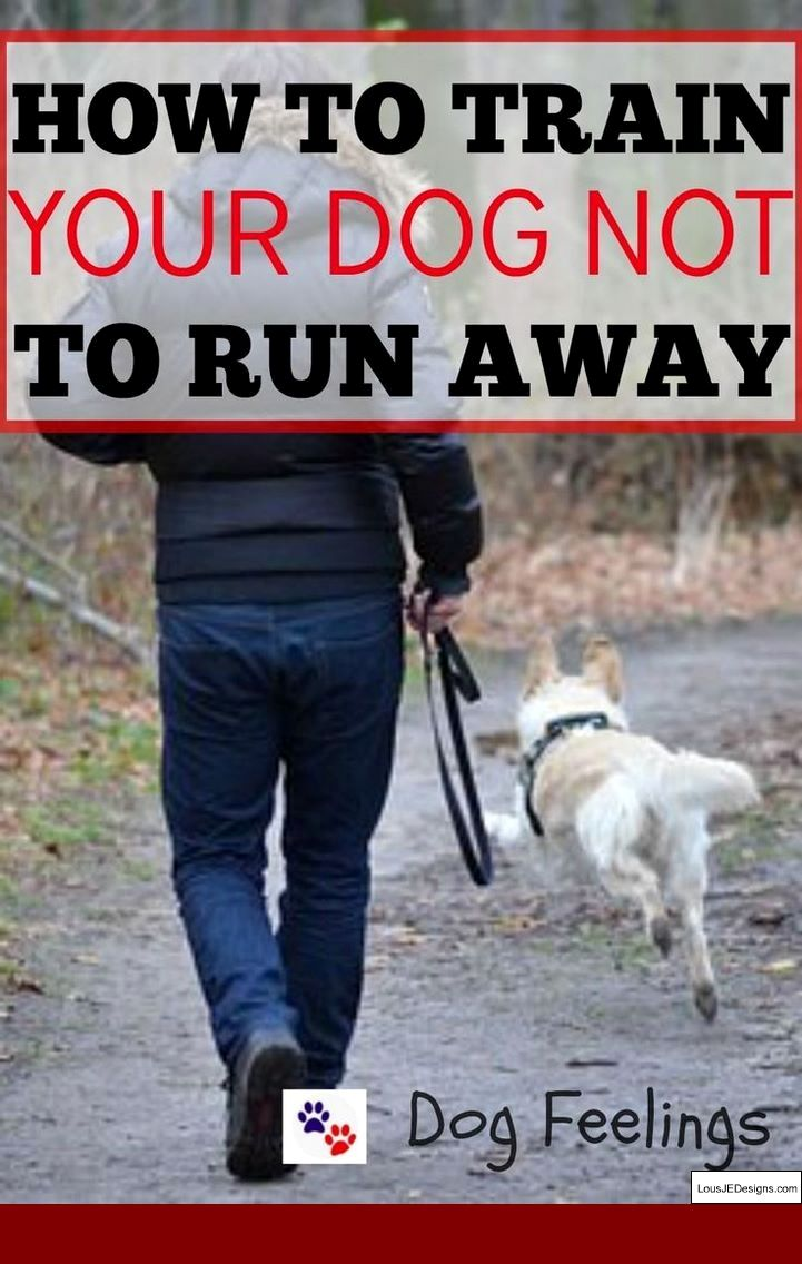 Dog Training Tips For Aggressive Dogs And Pics Of How Do I Train