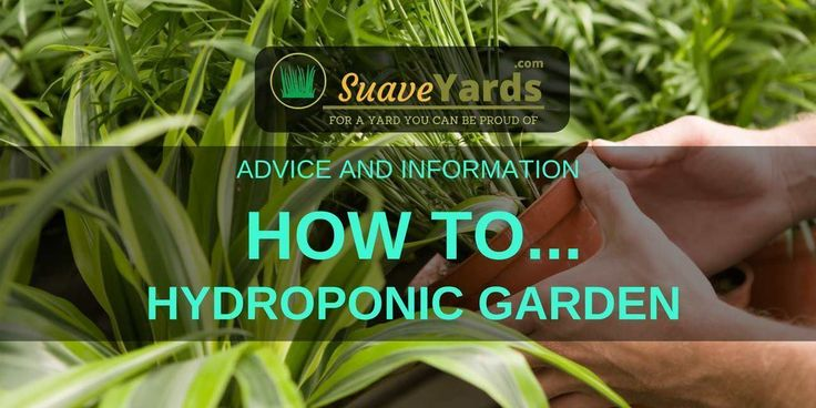 How To Hydroponic Garden - Gardening... Without Soil!  Lack the land for a traditional garden? Want to learn how to garden without soil? Hydroponic Gardening could be just for you. Grow anything from tomatoes to green onions and much more in between. Learn how to hydroponic garden. #hydroponicstomatoes #garderninghydroponic #hydroponicsonions