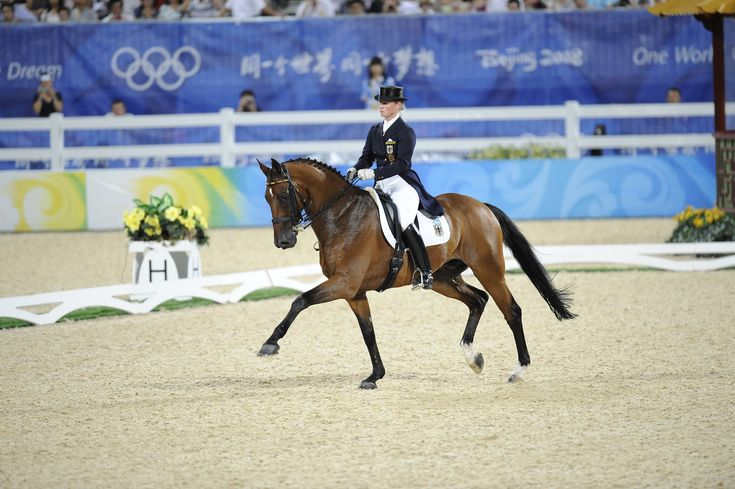Olympic Sports | ... London 2012 Olympic equestrian events unveiled - The Olympics Sports