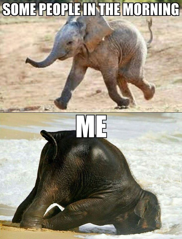 elephant.jpg (732×960)