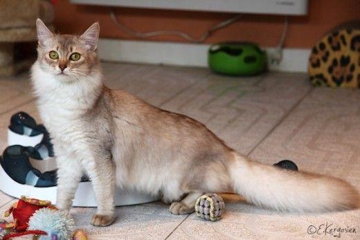 poinsettia cats eating
