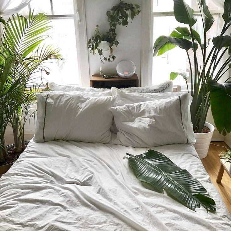 "14.2k Likes, 65 Comments - Urban Jungle Bloggers™ (@urbanjungleblog) on Instagram: ""Oh midweek we feel you! Time to curl up next to this 🌿! Sweet dreams everyone! 🌴🍀🌵🌿🌱💤 📷 by…"""