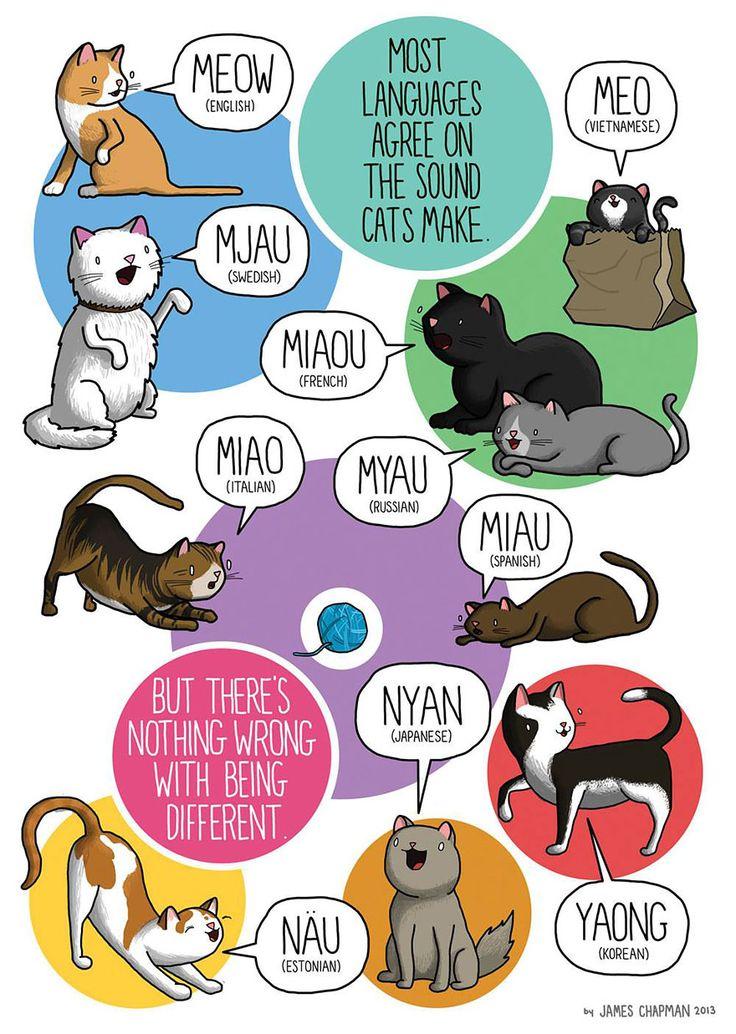 different-languages-expressions-illustrations-james-chapman-20  #cats