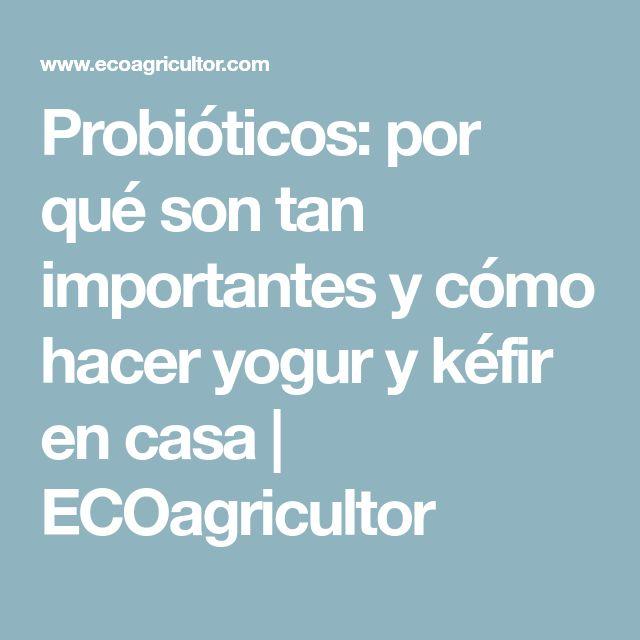 Probióticos: por qué son tan importantes y cómo hacer yogur y kéfir en casa | ECOagricultor