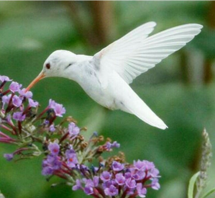 This White hummingbird reminds me of the life my grandma lived. She was strong, caring, loving, believer in Christ and lived her life to the fullest. She was an angel here on earth.
