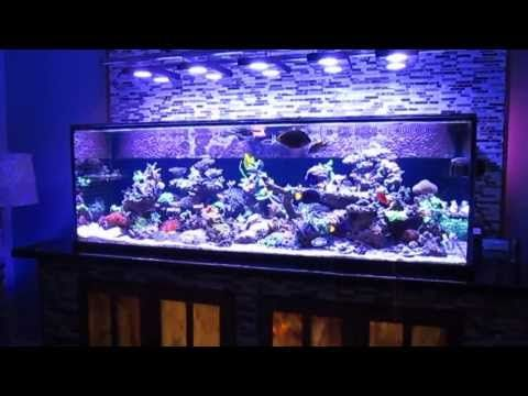 Saltwater fish tank reef aquarium MyReefLiving ( Ben 200 Gallon Super Efficient SPS Dominated ) - YouTube