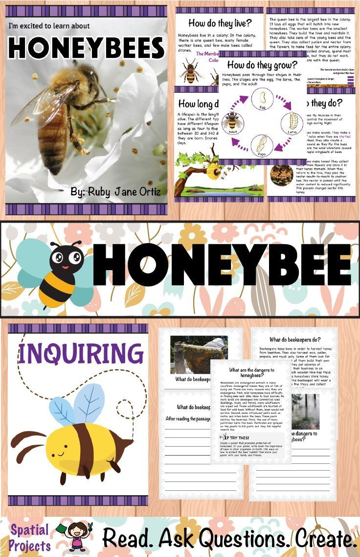 Check out this All About Honeybees nonfiction unit for your 1st [ 1136 x 736 Pixel ]