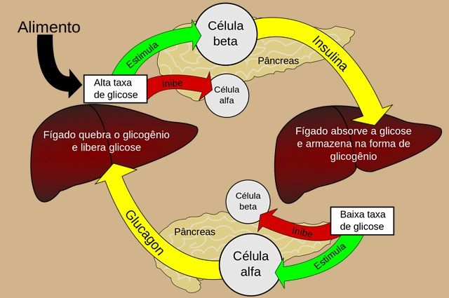 A fisiopatologia da diabetes tudo começa no pâncreas.  Que é uma glândula localizada atrás do estômago, e é responsável pela produção de um hormônio chamado insulina.