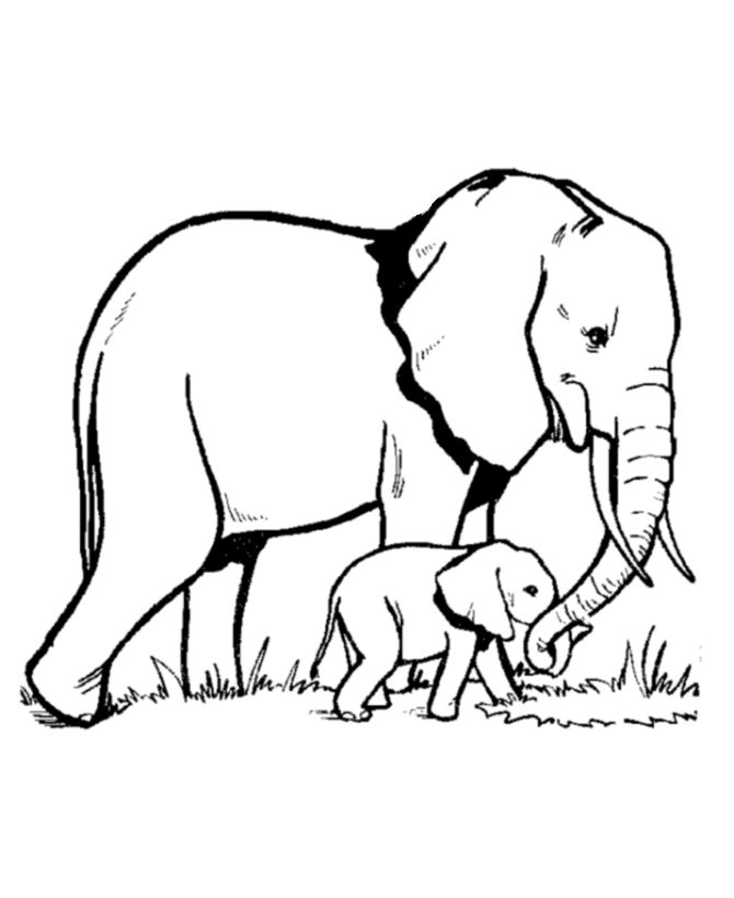 wild animal coloring pages wild animal coloring page elephant family coloring page - Animal Outlines For Colouring