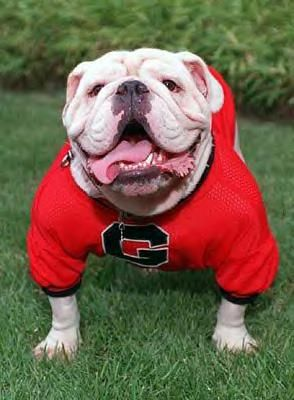 The 2nd Coolest mascot in college football, UGA, Georgia Bulldogs (the coolest mascot is Albert for the Gators)