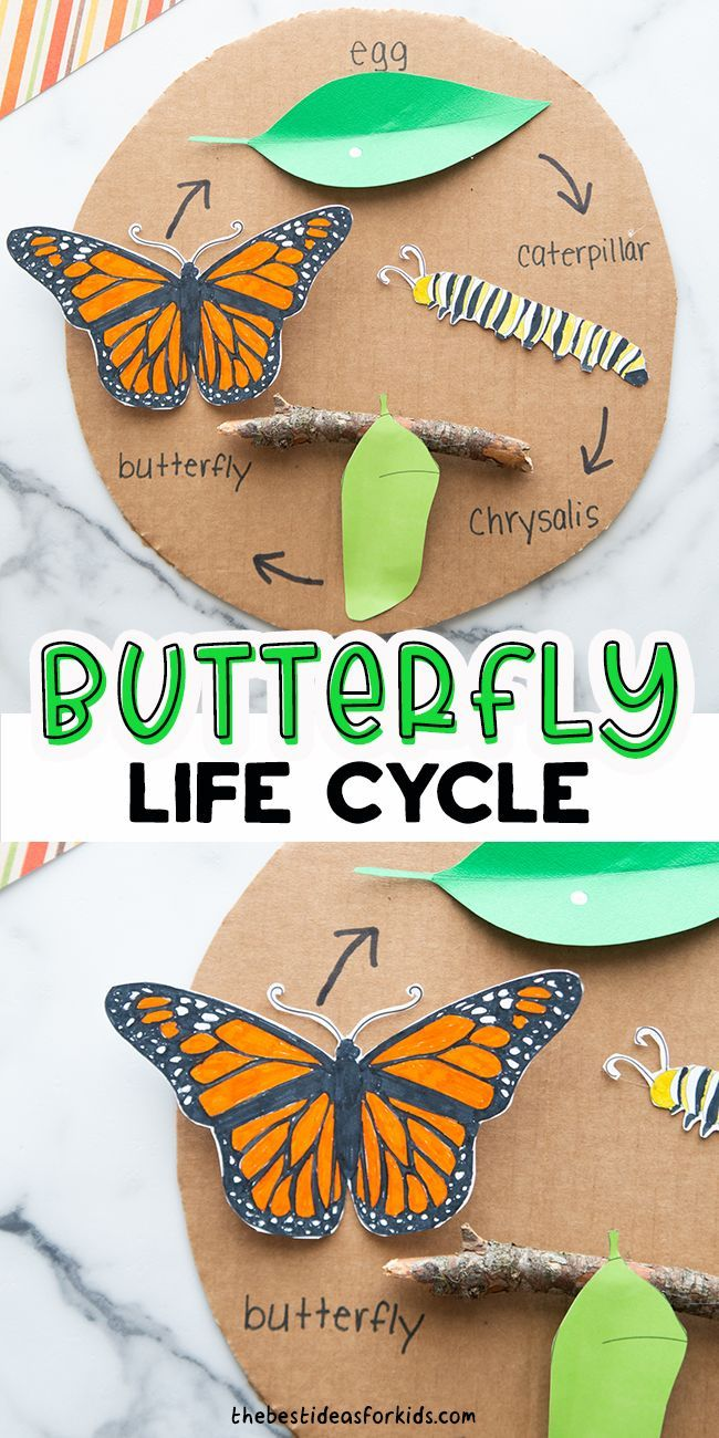 Predownload: Butterfly Life Cycle Craft With Free Template The Best Ideas For Kids Butterfly Life Cycle Craft Butterfly Crafts Preschool Butterfly Life Cycle [ 1300 x 650 Pixel ]