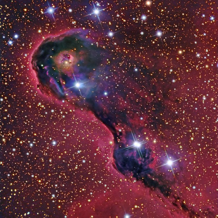 An Elephant's Trunk in Cepheus   Image Credit & Copyright: Processing - Robert Gendler, Roberto Colombari  Data - Subaru Telescope (NAOJ), Robert Gendler, Adam Block