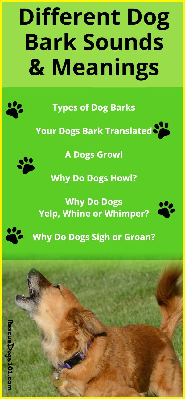 Types Of Dog Barks Dog Barking Dog Training Dogs