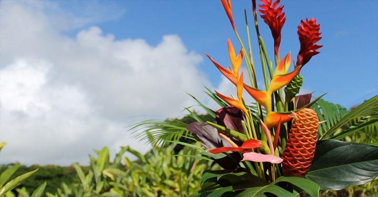 Maui Orchid Farm Tour