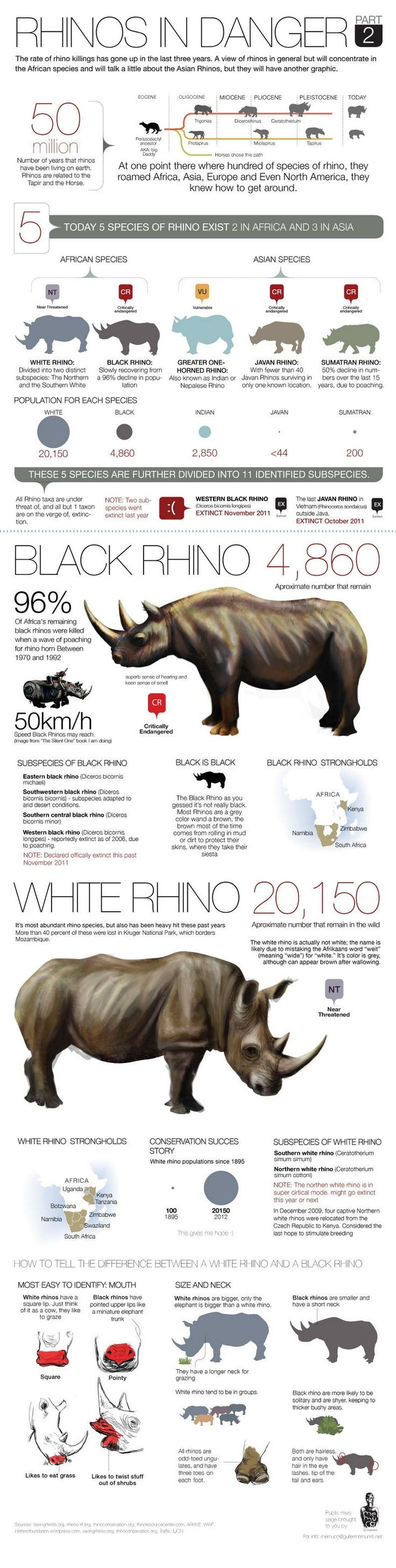 Rhinos en part2 peligro