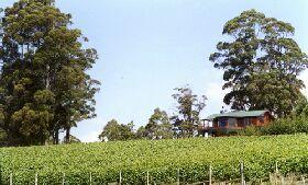 Barringwood Park Vineyard - Barrington