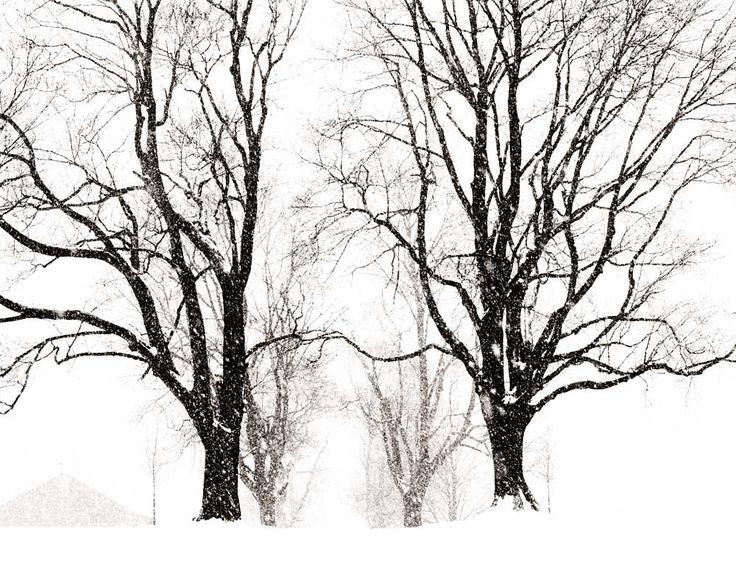 Black and White Decor Rural Photography, Bucks County Pennsylvania, Solebury School In Winter, Tree Decor by CarlChristensen on Etsy https://www.etsy.com/au/listing/59577723/black-and-white-decor-rural-photography