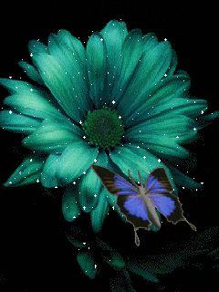 웃 ღ ♥¸.•*¨)¸.•*¨) flower and colours