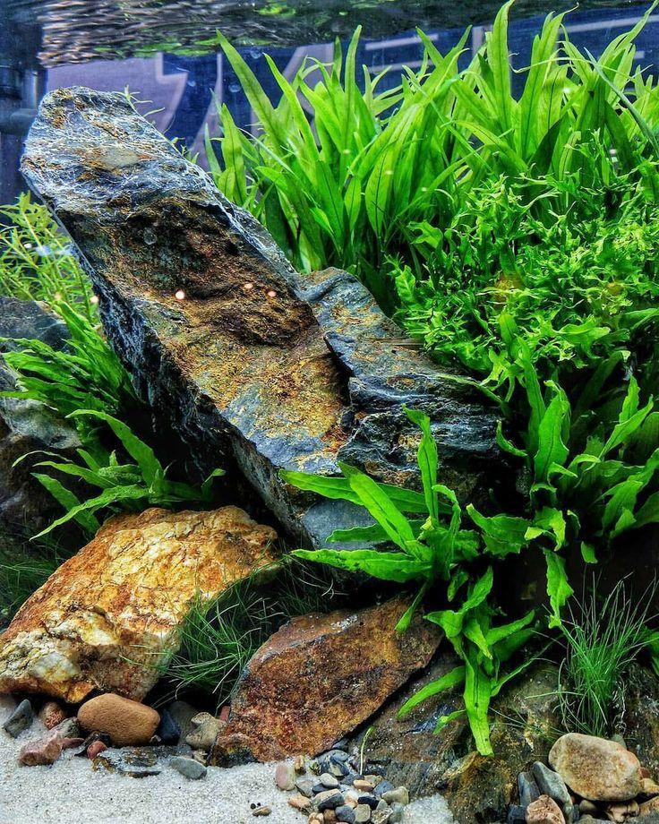 931 Best Aquarium