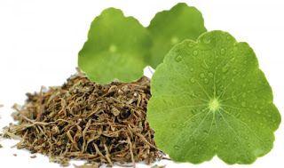 Tratamentos Naturais: Chá diurético
