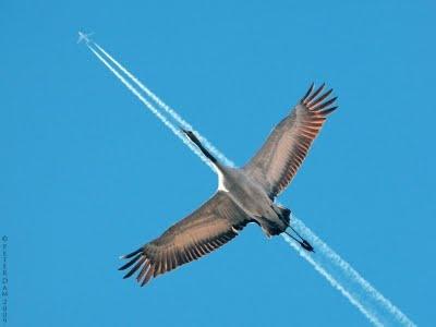 Perfect Flight