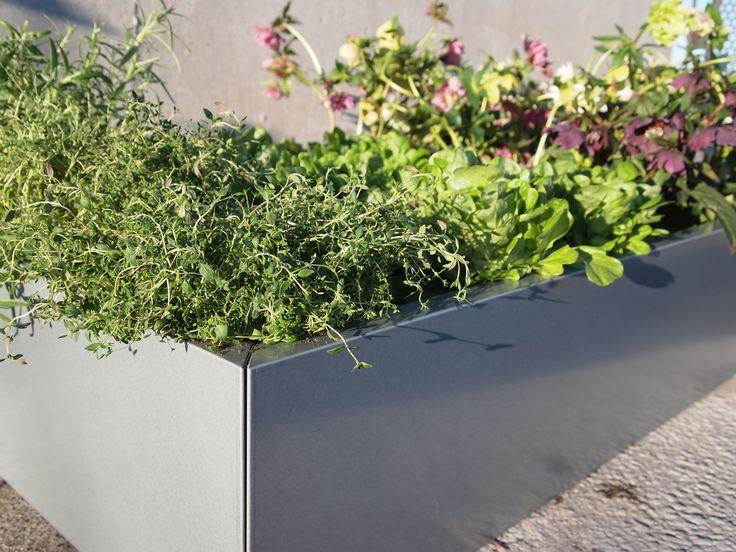 Urter og salat i BEDD høybed galvanisert stål