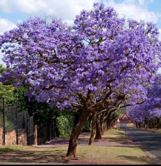 42 best Puerto Rico Flowers! images on Pinterest | Nature ...