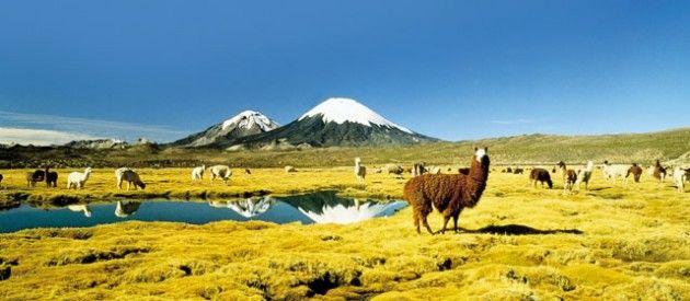 Parque Nacional Lauca norte de Chile
