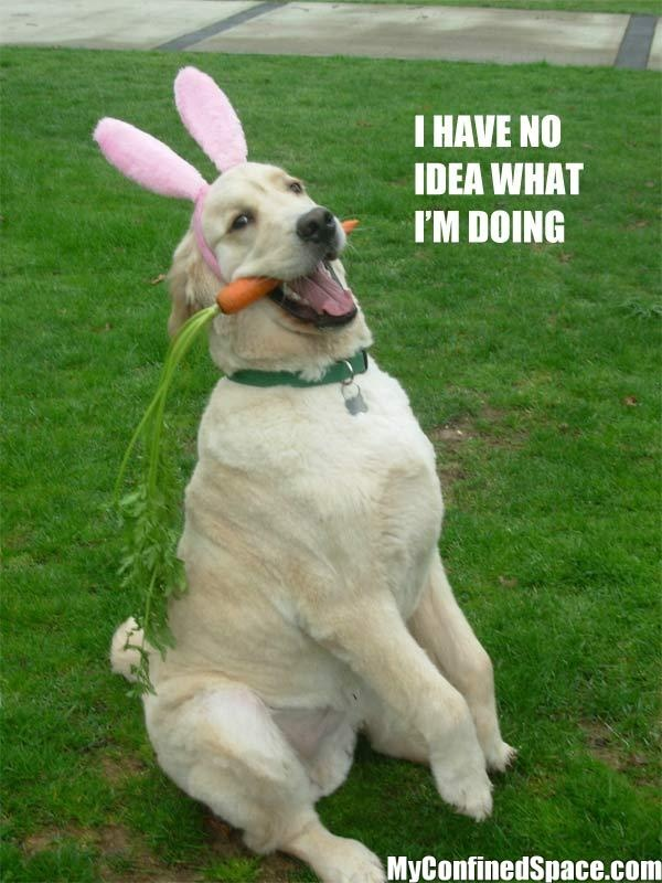 28 best EASTER Cats & Dogs images on Pinterest   Easter ...